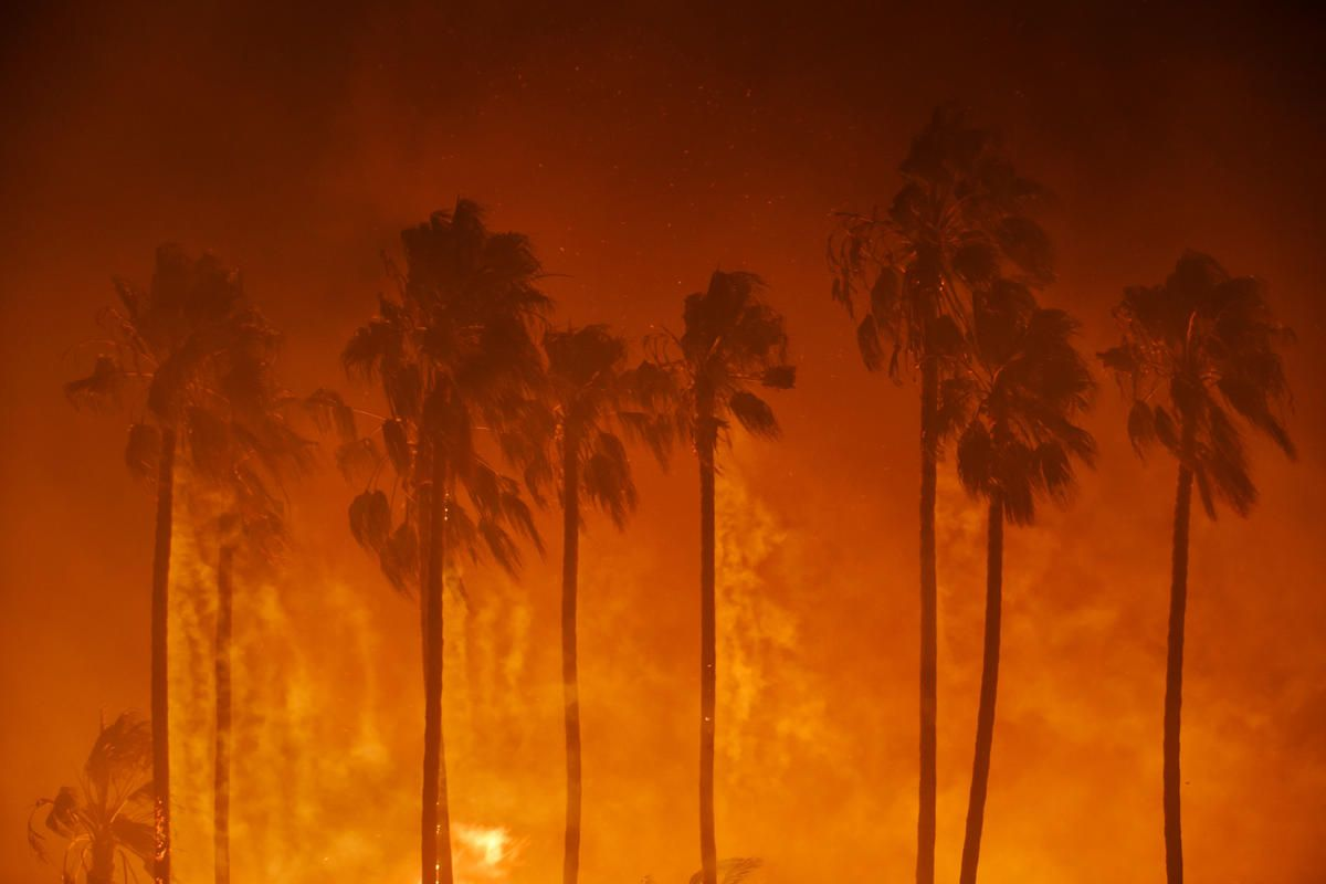 Dead in LA Burning Palms